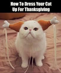 Thanksgiving Cat Meme - thangiving costume for cats jpg