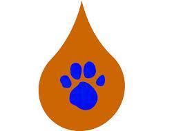 image color brown 1st blue u0027s clues png blue u0027s clues fanon