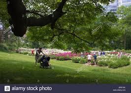 Michigan Botanical Gardens Peonies In Bloom Of Michigan Nichols Arboretum And