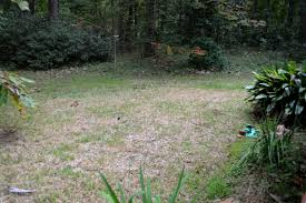 sod webworms attacking lawns tallahassee com community blogs
