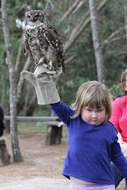 Little Girl Memes - diabolical little girl held an owl and the internet had a