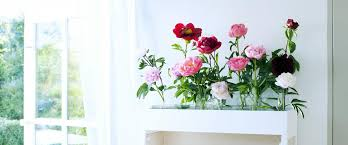 Flower Of The Month Peony Care Tips Chrysal