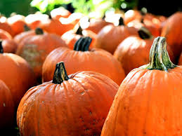 Brookfield Zoo Halloween by 100 Oakland Zoo Halloween 100 Events Celebrating Fall And