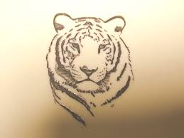 white tiger shield white tiger 2 white tiger 1