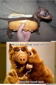 Alf Meme - alf s hotdog by clonerex34 meme center