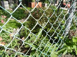 chain link trellis may 2011