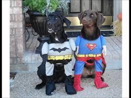 Pet Halloween Costumes Best Dog Halloween Costumes Youtube
