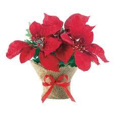 the aisle small everlasting poinsettia floral arrangement