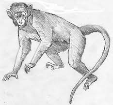 67 best monkey tatoo ideas images on pinterest drawings monkeys