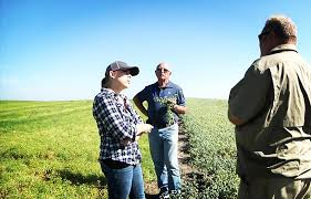 industrial hemp star crop montana agriculture kulr8