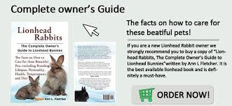 lionhead rabbit care diet lifespan faq pictures