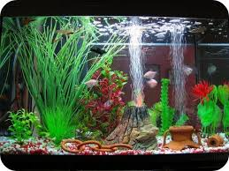 the 25 best cool fish tank decorations ideas on cool