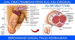 klg adalah obat pembesar penis asli herbal di jakarta