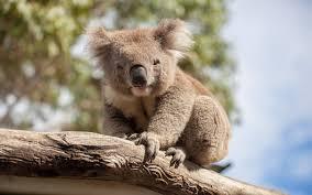 1920x1200 free desktop wallpaper downloads koala download