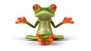 funny frog wallpaper desktop 1920x1200 177 97 kb