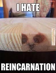 Hate Meme - i hate cat meme cat planet cat planet