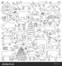 Coloring Forest Animals Coloring Pages Amazon Rainforest Within Forest Animals Coloring Pages