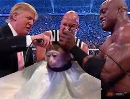 Meme Monkey - 34 monkey haircut meme dump funny goblin