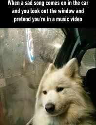 Sad Animal Memes - 60 funny dog memes that will keep you laughing