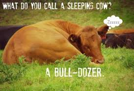 Funny Cow Memes - cow puns funny cow memes