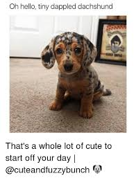 Cute Christmas Meme - dachshund christmas meme festival collections
