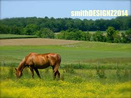 equine home decor equestrian photography horse photography farm photo show horse