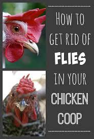 Flies In Backyard How To Rid Your Chicken Coop Of Flies Imaginacres