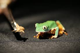 the power of frog spit video nytimes com