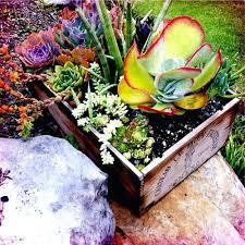 planter for succulents succulents planters creative indoor and outdoor succulent garden
