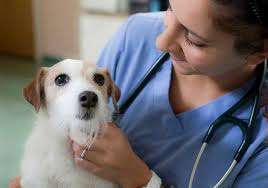 responsibilities for a veterinarian wildlife veterinarian job