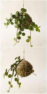 Buy House Plants Peperomia String Garden String Garden Plants And Gardens