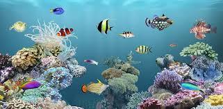 wallpaper ikan bergerak untuk pc wallpaper aquarium bergerak 1000 aquarium ideas