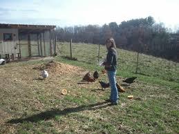 Best Backyard Chicken Breeds by Pickin U0027 The Right Frickin U0027 Chicken Guide To Picking Backyard