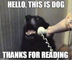 Reading Meme - yes this is dog imgflip