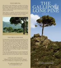 about the gallipoli lone pine