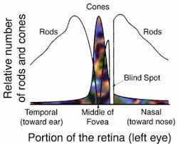 Blind Spot Left Eye Visual System