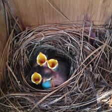 inside a nesting supplies wings backyard nature