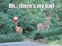 Oh Deer Meme - basketball deer weknowmemes