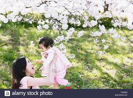 cherry blossoms images japanese mom and daughter enjoying the cherry blossoms stock photo