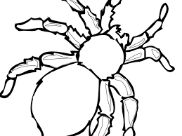 download printable spider coloring pages ziho coloring