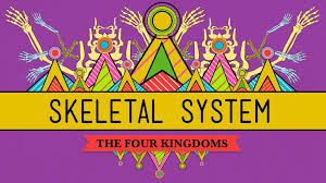 Anatomy And Physiology Skeletal System Test The Skeletal System It U0027s Alive Crashcourse Biology 30 Youtube