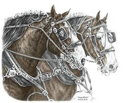 clydesdale horse drawings fine art america