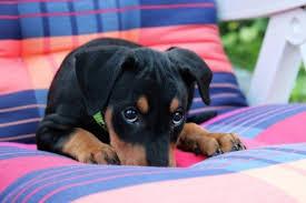 Puppy Dog Eyes Meme - l puppy dog eyes jpg
