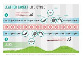 500 Sqm Nemasys Leatherjacket Killer Effective Treatment For