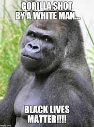 Gorilla Meme - hot gorilla meme generator imgflip