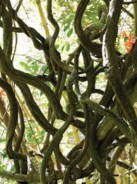 native hawaiian plants tour the exotic hawaiian tropical gargen hgtv