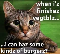 Funny Virgo Memes - five funny cat memes and maze of the virgo sign au