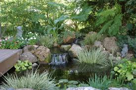 pond installation maintenance contractor pond contractor services
