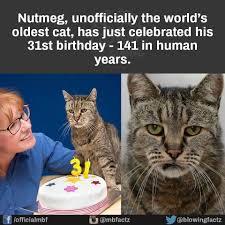 Tired Cat Meme - this cat imgur