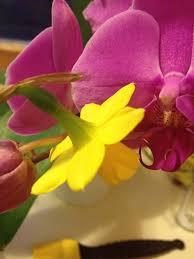 the helpful art teacher a garden of flowers blending colors